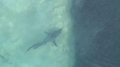 Wanneer je deze luchtbeelden van haaien ziet, begrijp je waarom stranden gesloten werden