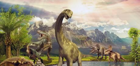 Restanten van 385 miljoen jaar oud oerbos gevonden in staat New York