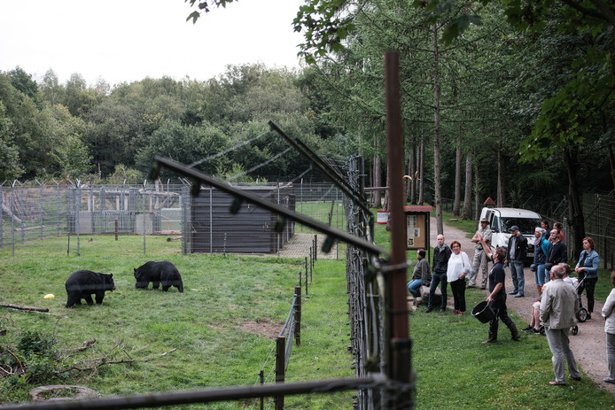 Ronald Ebbeskamp voert de beren van Anholt, nu het nog kan.