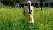Knokke-Heist houdt van bijen en omgekeerd: vijf bloemenweides in Europese top 10, 'therapeutische bijentuin' aan woonzorgcentra