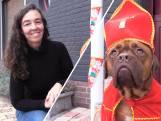 Sinterklaashond Isa steelt de show in Putte