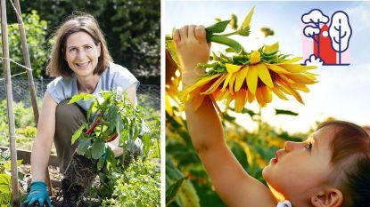 Zelf reusachtige zonnebloemen en pompoenen kweken? Laurence Machiels helpt je op weg