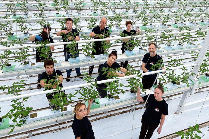 Arbeidsmigranten in de tomatenkwekerij van Jan van Marrewijk in Dinteloord