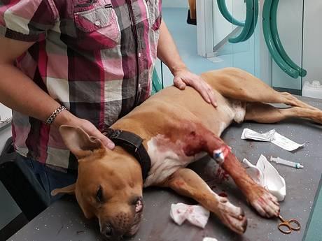 Hond tot bloedens toe aangevallen door bever in Biesbosch