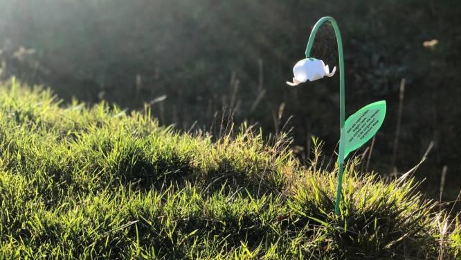 Meise wil 4.000 lichtgevende mijmerklokjes in Rozentuin zetten voor goede doel