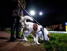 Oprichter Hondjeuitlaten.nl ziet interesse in leenhond vervijfvoudigen sinds aankondiging avondklok
