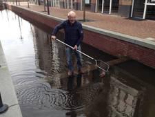 Zijn alle goudvissen weg uit de gracht in Veenendaal?