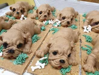 Zijn deze schattige puppy's niet om op te eten? Frituuruitbaatster maakt hondjes in chocomousse