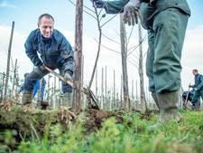 Collega's schieten gedupeerde teler te hulp: 2.500 omgezaagde boompjes vervangen