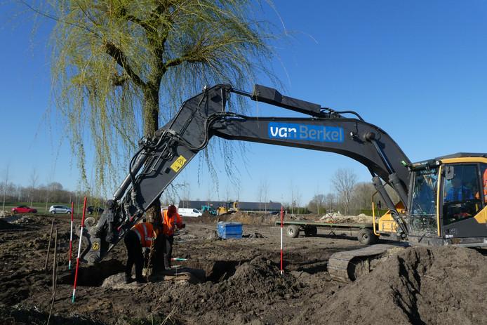 Bij BestZoo, bij het nog te maken nieuwe entreegebouw, wordt een grote treurwilg geplant. Daaromheen wordt een vijver gegraven zodat de boom op een eiland komt te staan.