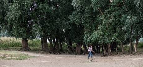 Vier Tiny-forests in Nijmegen om stad op te groenen