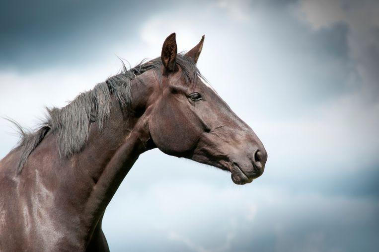 Archieffoto paard.