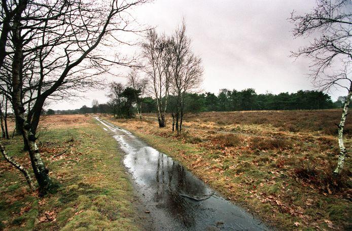 Voedselarme natuurgebieden worden bedreigd door een overmaat aan stikstof.