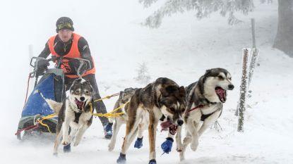 Voormalig wereldkampioen sledehondenrace wil titel terugwinnen