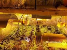 Politie vindt hennepkwekerij in schuur