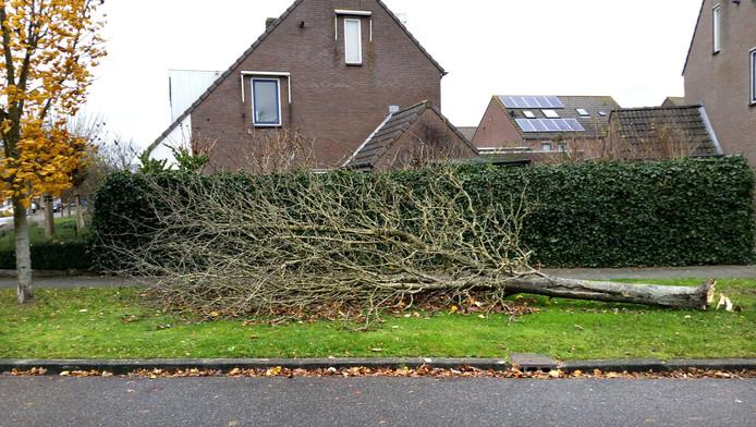 Eerste omgewaaide boom in Oudenbosch. Tweet van wijkagent Halderberge