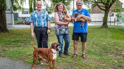 Hondenwandeling om dieren in nood te helpen