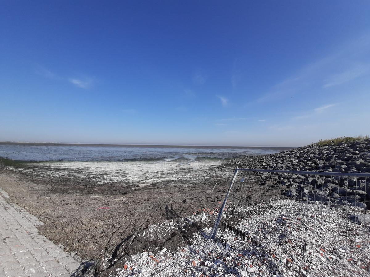 In de hoeken van het werkeiland van TenneT in de Oosterschelde bij Krabbendijke heeft zich een dikke laag zeewier opgehoopt. Vooral bij warm weer stinkt dit behoorlijk.