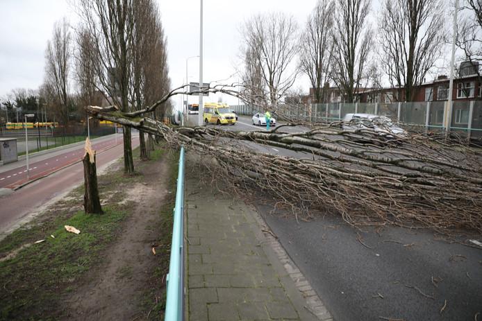 Op het Schenkviaduct in Den Haag waaide een boom om. Een langsrijdende automobilist kon de boom maar net ontwijken.