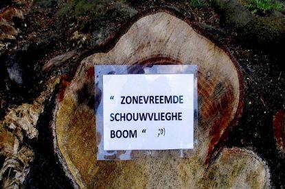 """Lezer vindt eerste """"zonevreemde Schauvliege-boom"""""""