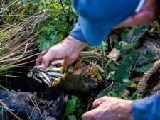 Pris pour du gibier, un cueilleur de champignons se fait abattre par un chasseur