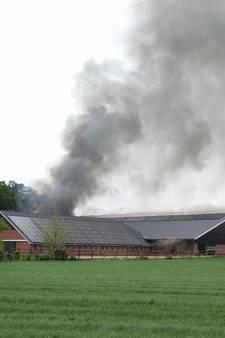 Grote brand naast stal in Haaksbergen, koeien geëvacueerd