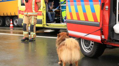 Trucker gewond bij kop-staartbotsing met drie vrachtwagens op E34, brandweer ontfermt zich over zijn hond
