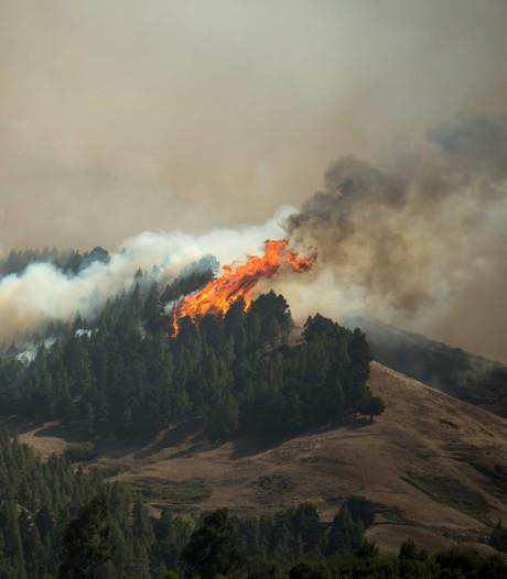 Bosbranden Gran Canaria breiden zich uit, al zo'n 8000 mensen geëvacueerd