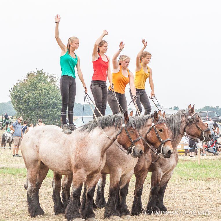 De acrobatische paardenshow van Debrabandere komt naar de Kriekefeesten in Ingelmunster.