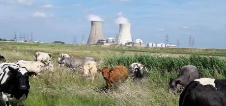 Belgische kernenergiecrisis  kan ook Brabant treffen