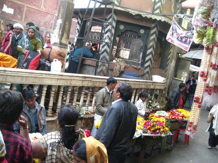 Voor de Banke bihari-tempel in in Vrindavan, India, waar de aap met geld smeet. Beeld Ashishbhatnagar72/ Wikimedia