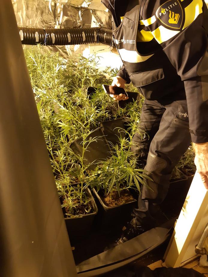 De wietkwekerij in Klarendal telde meer dan 600 planten.