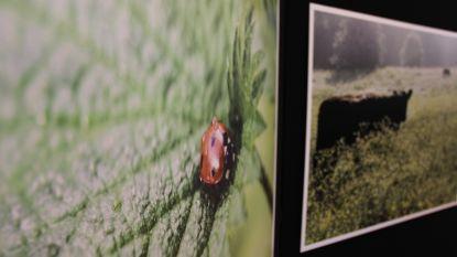 Natuurgebied Burreken in foto's: landschapsfotograaf Paul Muylaert stelt tentoon