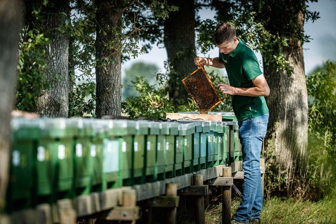 Zo'n vijfhonderd bijenkasten heeft Mario Coremans (24). Niet voor de honing, maar om de werkbijen in tuinderskassen te laten doen waar ze goed in zijn: bestuiven.