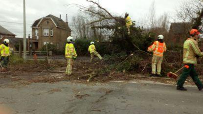 Storm Ciara zorgt voor omgewaaide bomen en werfhekken, plat dak in Erembodegem dreigt weg te waaien