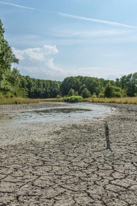 Brabantse waterschappen denken aan maatregelen: 'Droogterecord 1976 gaat eraan'
