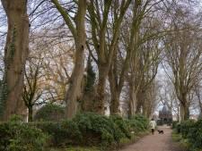 Bomenkap én herplanting op kerkhof Raalte opgeschort door sluiting van kerkgebouwen Parochie Heilig Kruis