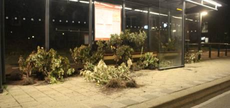 Opmerkelijk: bushokje in Hengelo volgezet met planten