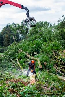Kaalslag Rottemeren: essentaksterfte velt duizenden bomen