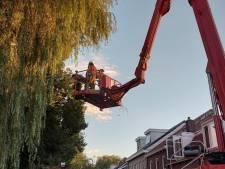 Afgebroken takken, bomen op de weg en een omgewaaid dak: storm Francis zorgt voor overlast in de regio