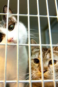 Rotterdams afgifteloket voor honden en katten om dumpen huisdieren tegen te gaan