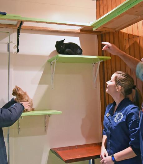 Kat in 't bakkie! Nieuw poezenpension in Oostburg