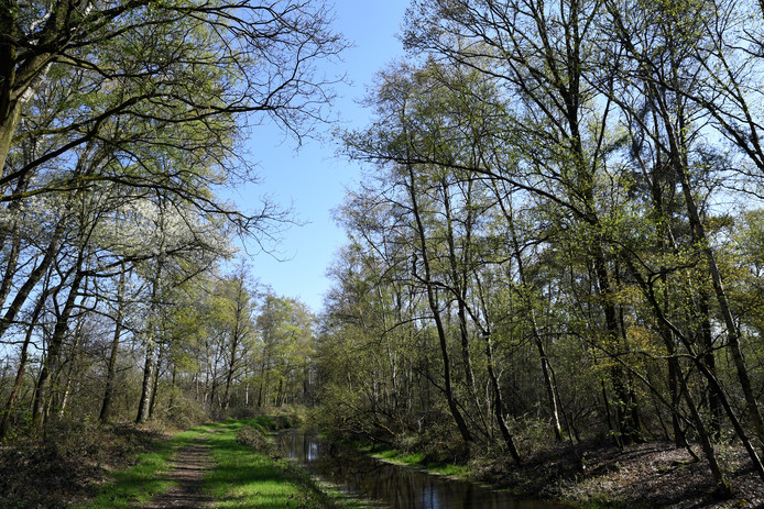 Een bosgebied in de buurt van Breda