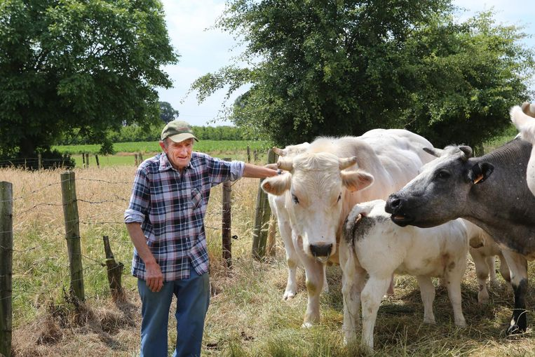 Boer Emile Vandervelpen bij enkele van zijn andere runderen.