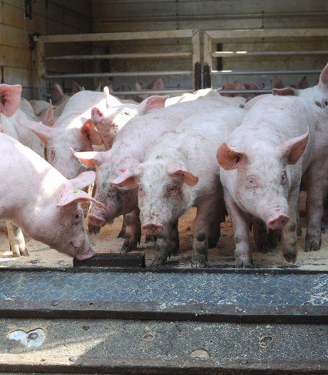 Dertig boeren in anderhalf jaar tijd zijn er mee gestopt in Sint Anthonis, 'kunnen er inmiddels alweer meer zijn'