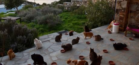 Deze opvang met 55 katten op een Grieks eiland betaalt je om er te wonen