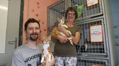 Overvloed aan katjes in dierenasielen