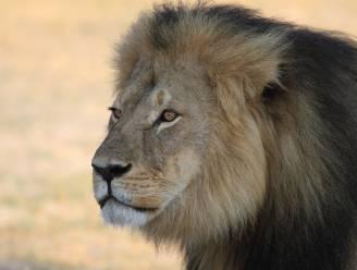 Tandarts die leeuw Cecil doodde gaat weer aan het werk