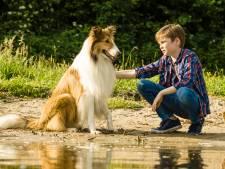 Prettig de naam weer eens te horen: Lassie