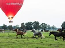 Luchtballonnen mogen niet landen bij maneges
